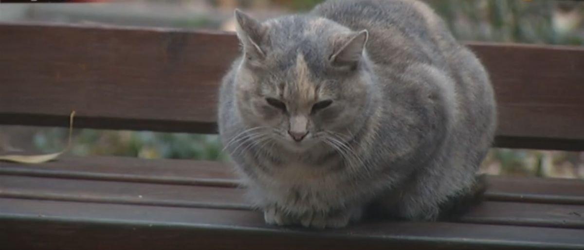 Пес разорвал домашнюю кошку: В Мариуполе сосед с собакой держит в страхе весь дом (Видео)