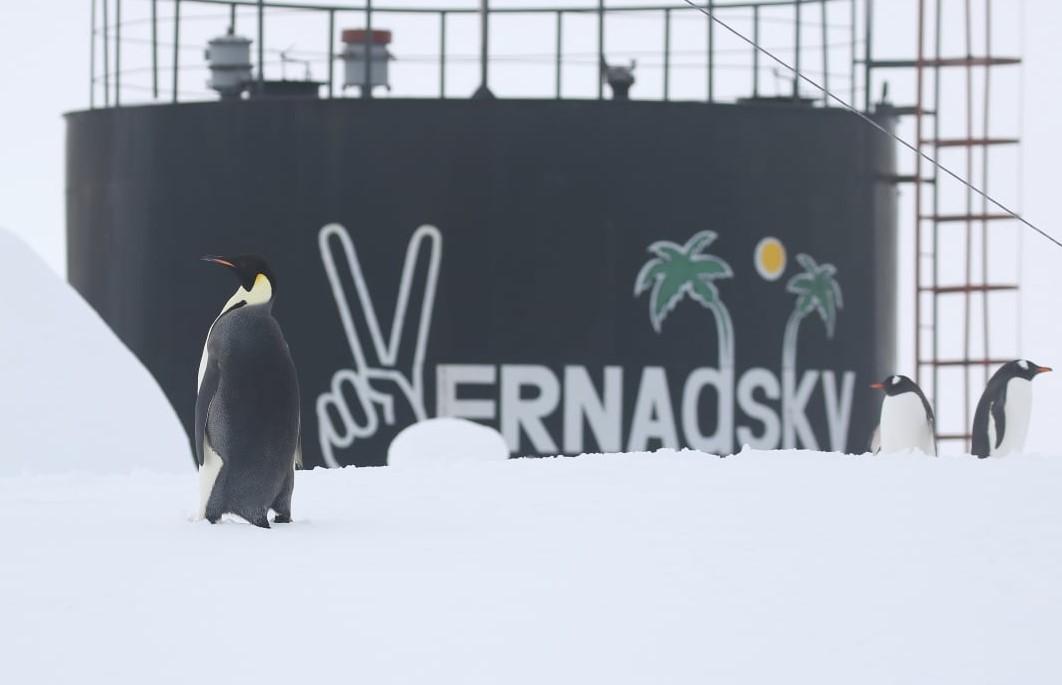 К украинским полярникам в Антарктиде пришел императорский пингвин
