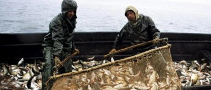Украина пока не будет подписывать договор с РФ о рыболовстве в Азовском море