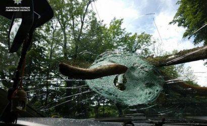 Во Львове водитель отсудил у мэрии 91 тысячу гривен из-за ветки, упавшей на авто