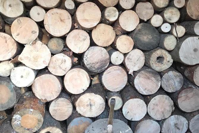 На Харьковщине восемь работников лесгоспа подозревают в вырубке леса на 98 миллионов гривен
