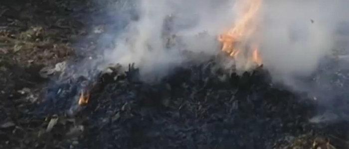 Осенние листья: На Донетчине рассказали, почему нельзя сжигать и как безопасно утилизировать (Видео)