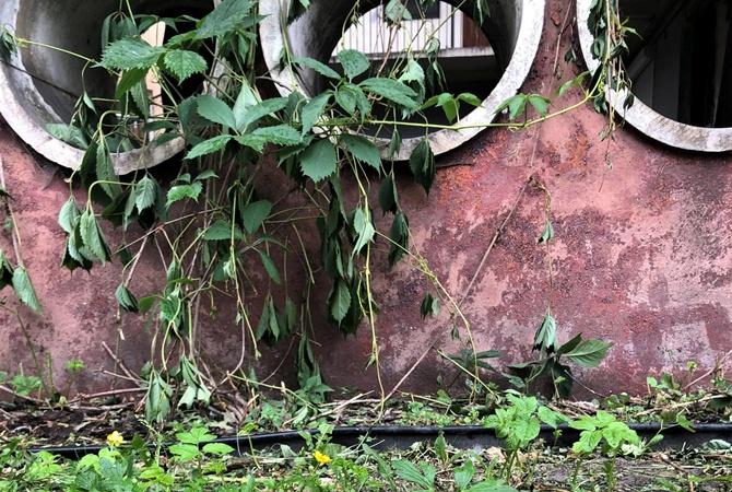 Во Львове вандалы выкосили дождевой сад