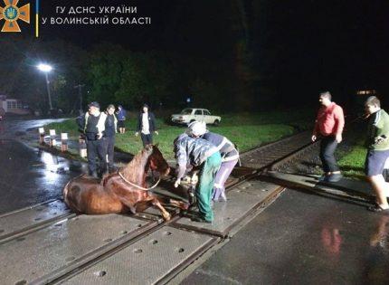 На Волыни из-за застрявшего на рельсах коня останавливали электрички