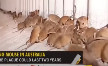 В Австралии мыши «отвоевали» у людей тюрьму