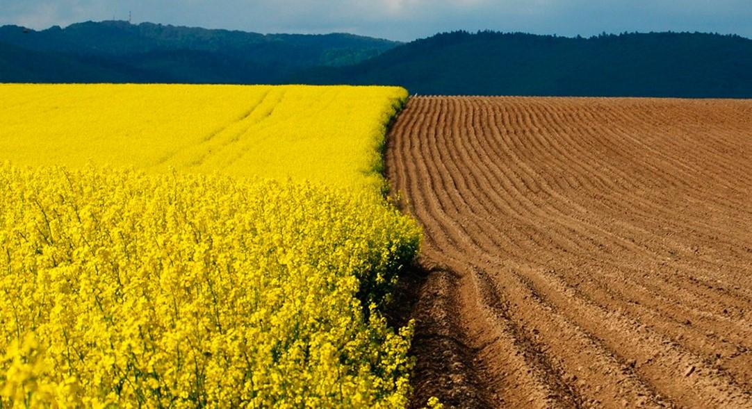 Социологи выяснили, как украинцы относятся к продаже земли