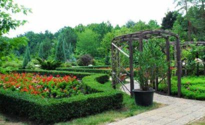 Без окон, но с самой большой коллекцией кактусов: В Донецком ботаническом саду рассказали о проблемах и достижениях
